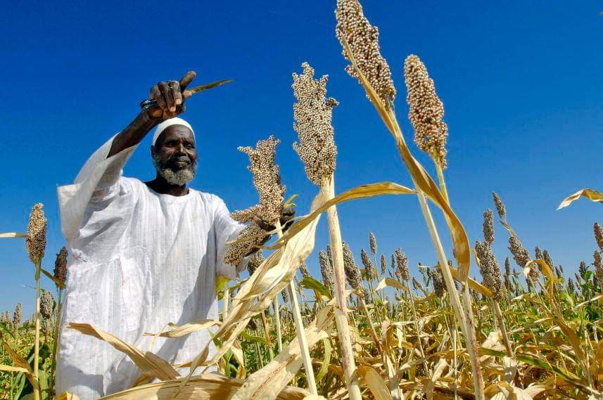 sorghum farmers