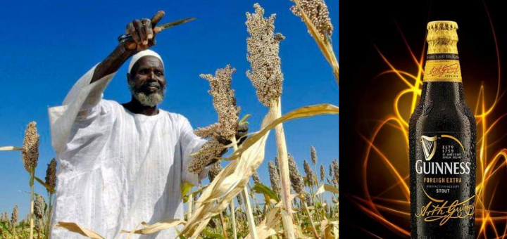 sorghum farmers and Guinness